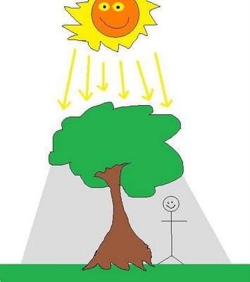 El calor y las plantas