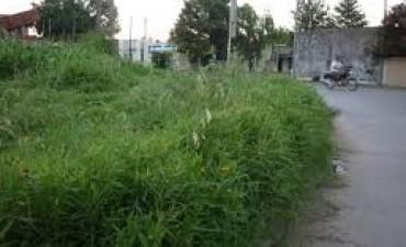 Azul: El gobierno Municipal realiza un relevamiento de terrenos baldíos