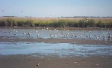 Los canales clandestinos afectan la Laguna Indio Muerto en Saladillo