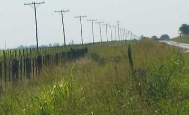Los cortes de luz en la zona rural se reparan totalmente este lunes