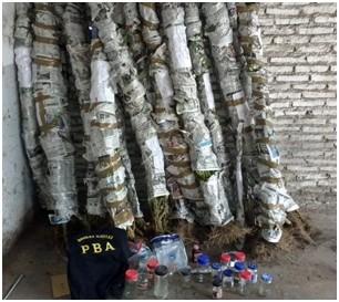 Un aprehendido y 50 plantas de marihuana secuestradas tras allanamiento