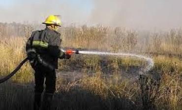 Incendio de pastos y de 5 palmeras
