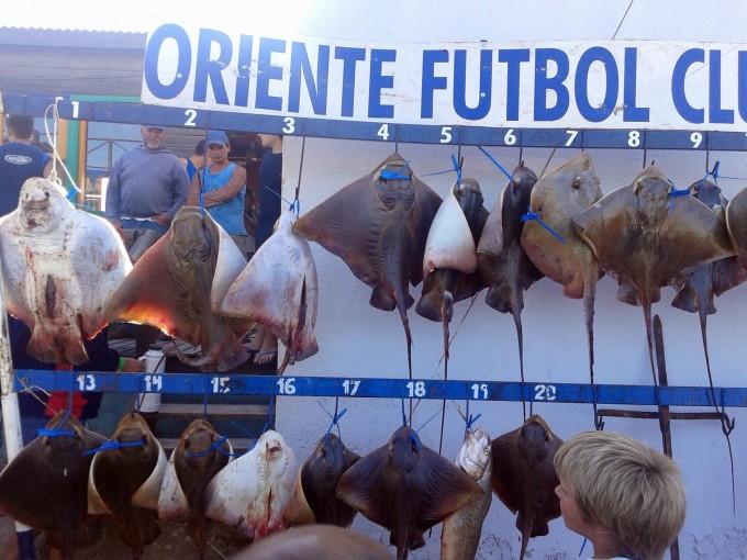 Radio Olavarría en el certamen de pesca de Marisol