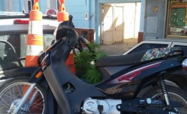 En allanamientos recuperan motos y secuestran plantas de marihuana