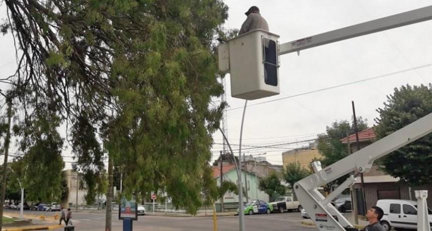 Se realizaron tareas de poda de seguridad