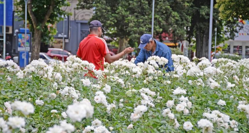 El Municipio realiza tareas de embellecimiento en la Plaza Central