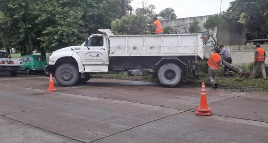 Tras la tormenta, el Municipio trabajó en la recolección de árboles y ramas caídas