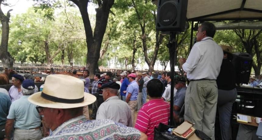 Remate Wallace S.A Consignatarios  se realizó en Sociedad Rural de Azul