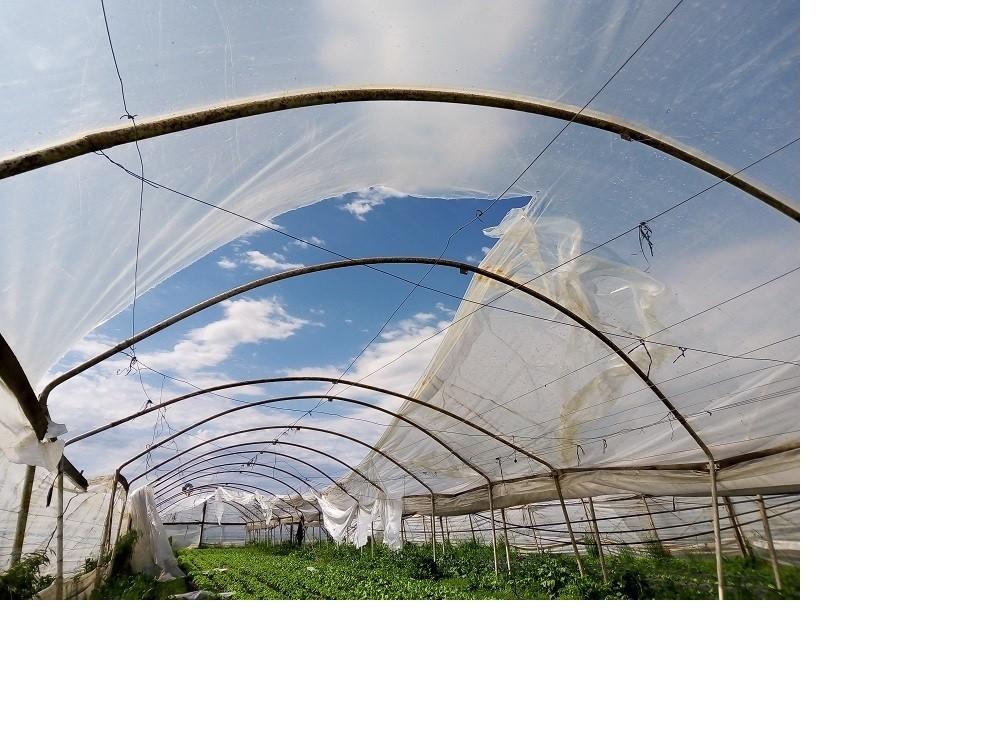 Productores hortícolas en busca de recuperarse tras vendavales