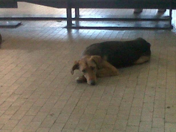 Perros y gatos:esta semana comienzan las castraciones gratuitas