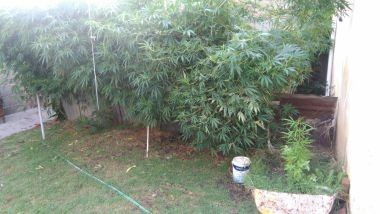 Facundo Quiroga: Secuestran una veintena de plantas de marihuana