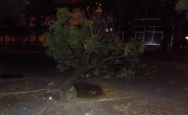 Tras la tormenta: falta energía en varios barrios y el campo, árboles y postes caídos