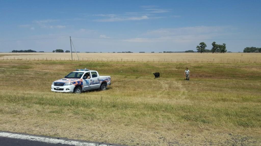 Actuaciones del Comando de Prevención Rural