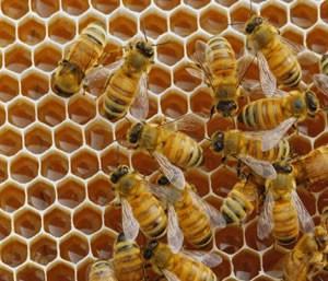Encuentro para apicultores en General Belgrano