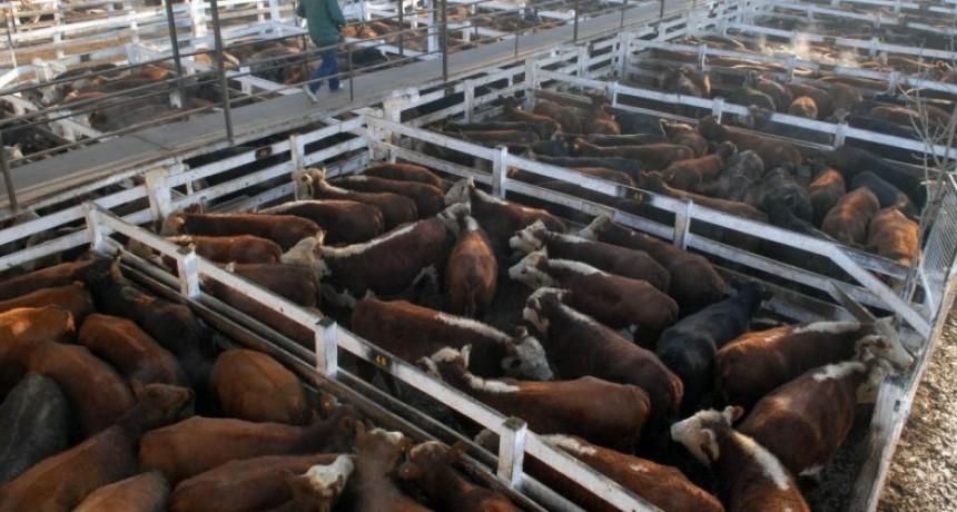 La ganadería atraviesa un buen presente