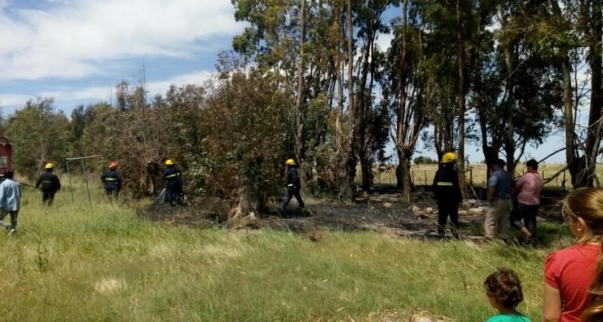 Controlaron un incendio de árboles que ponía en peligro a una escuela rural