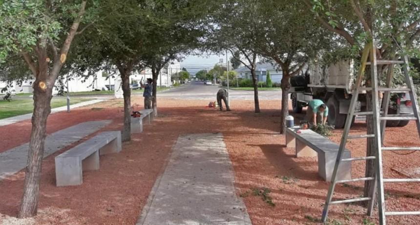 En la Plaza España se realizaron trabajos de poda