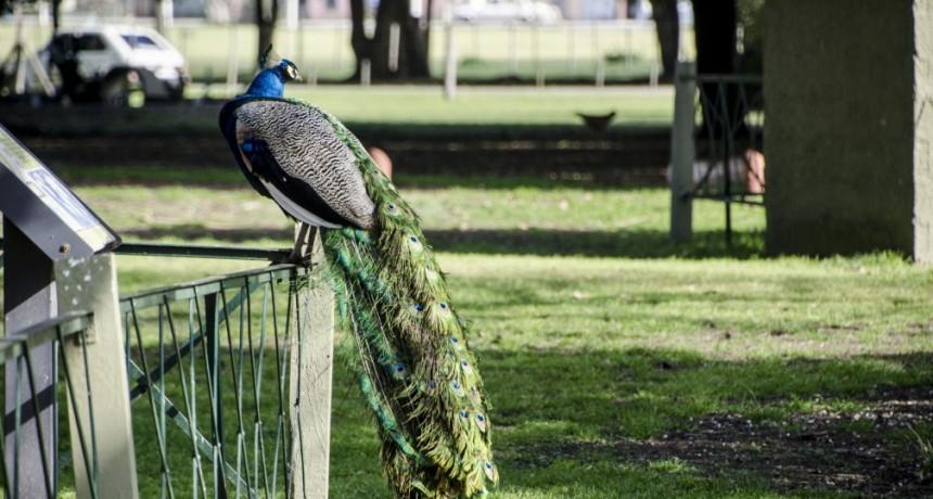 Con una propuesta sobre aves, preparan el Centro de Interpretación Ambiental en La Máxima