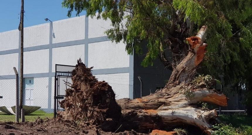 El interbloque de Todos solicita informes por la extracción de árboles