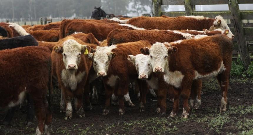 El Senasa extendió plazo de inscripción de campos con ganado destinado a la Cuota Hilton a la UE