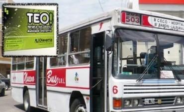 TEO: notifican a la empresa Nuevo Bus