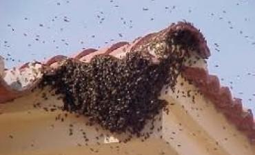 Microcentro: Cortan el tránsito para sacar un enjambre de abejas