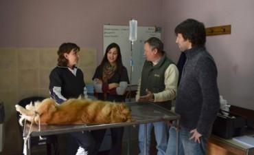Cuerpo de Protección Animal: 400 castraciones felinas y caninas durante febrero