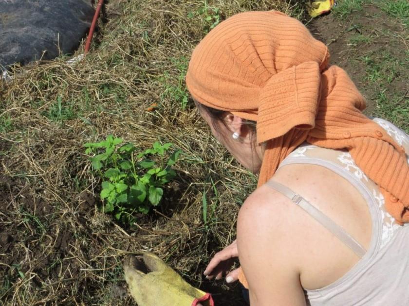 Talleres de Huerta Agroecológica y Bioconstrucción