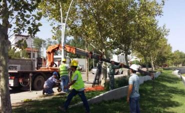 Iluminación del Parque Mitre: importante avance de obra
