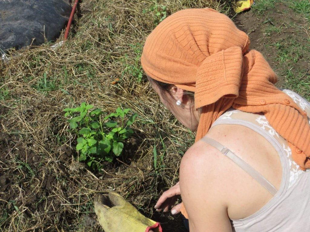Educación Ambiental: taller de huerta familiar agroecológica