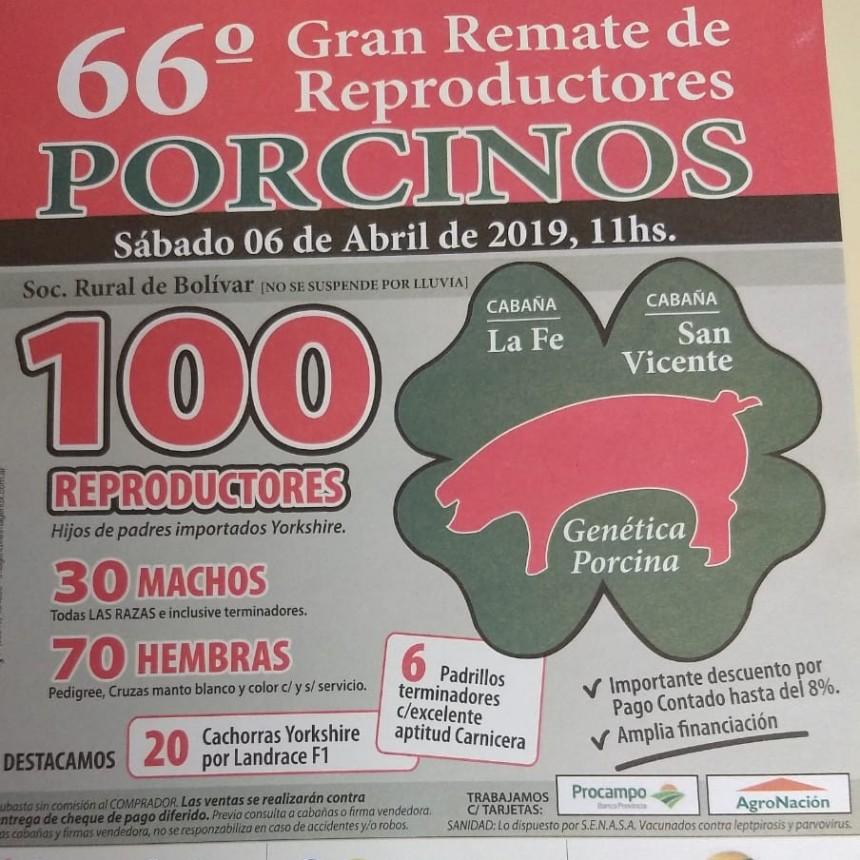 66° Gran remate de reproductores porcinos sábado 6 de abril en Bolivar
