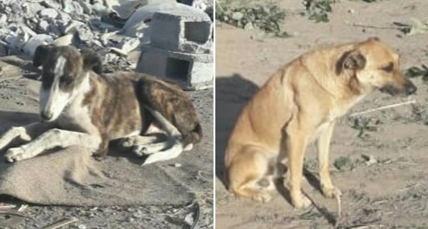 Preocupación por una treintena de perros en un basural