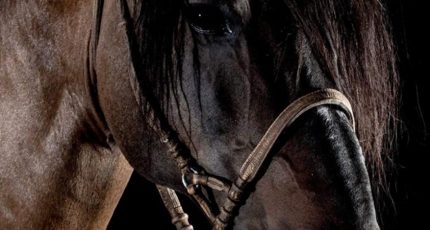 Hasta el martes se desarrolla la muestra 'Nuestros caballos' en la Rural