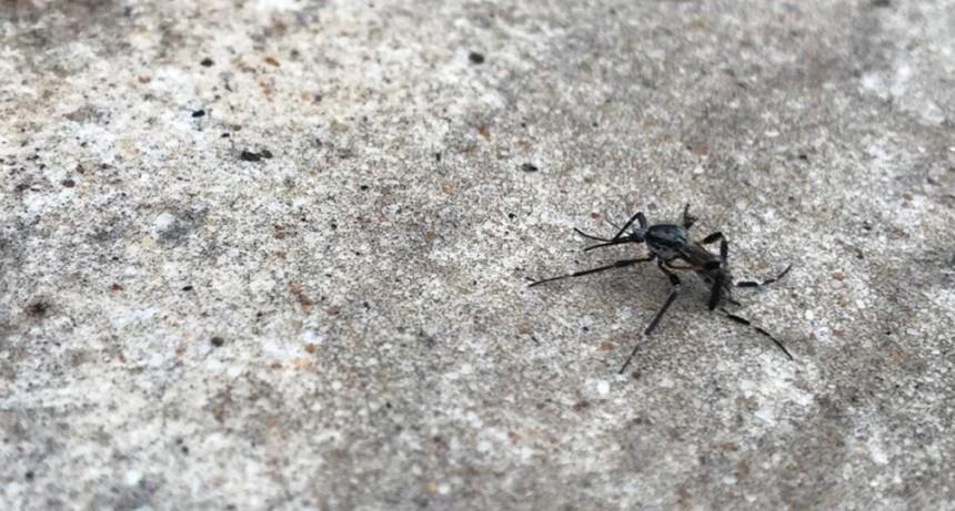 Dengue: por el mal tiempo suspendieron la fumigación