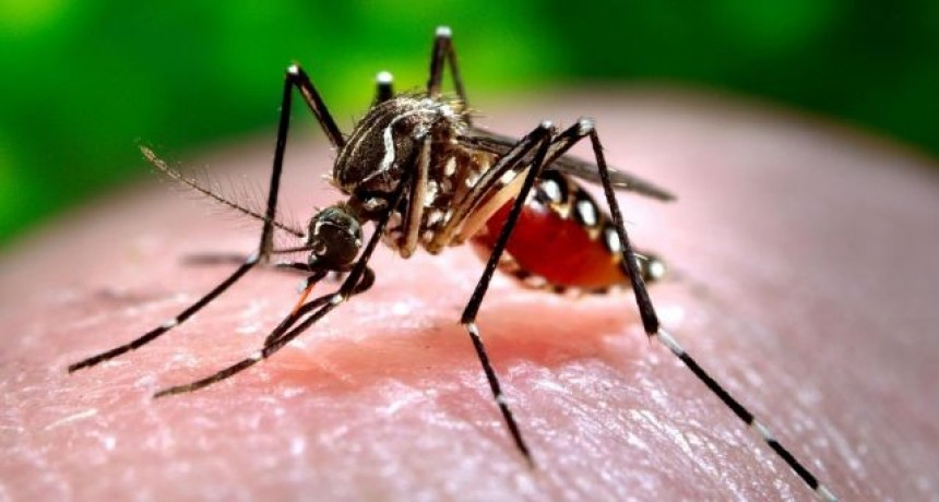 Dengue: continúan las tareas preventivas de Bromatología