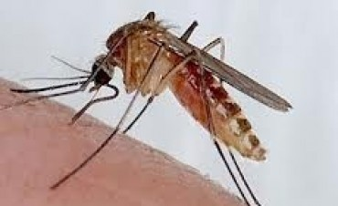 Mosquitos: