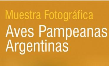 """Último fin de semana para visitar la muestra """"Aves Pampeanas Argentinas"""" en el Museo Municipal de las Ciencias"""