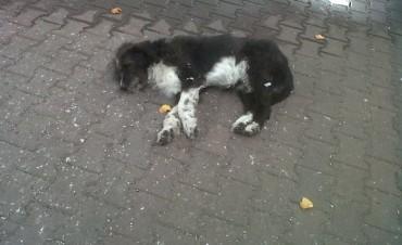 Colecta de alimentos y medicación para perros callejeros