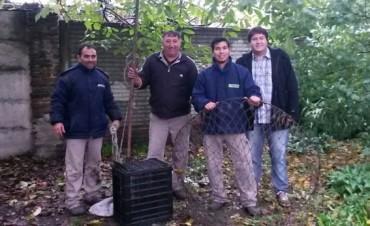 Olavarrienses rescataron al mono de Azul