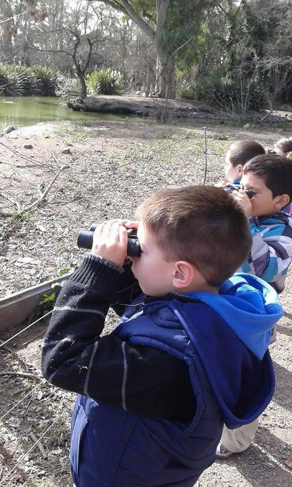 Observación de aves en libertad