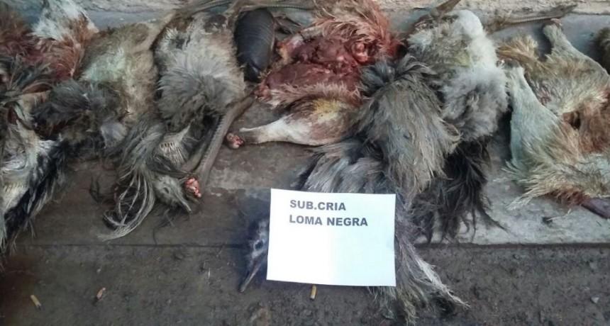 Labran infracción a cazadores
