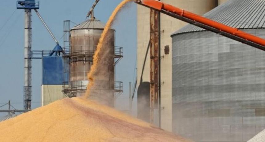 El análisis de los cereales pasó en Sintonía Agropecuaria