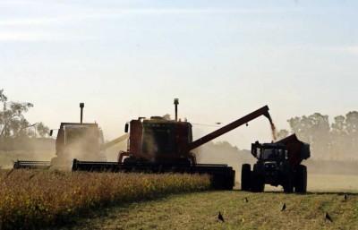 Unos 2.500 a 3.000 kilos por hectárea registra la soja en la cosecha en nuestra región