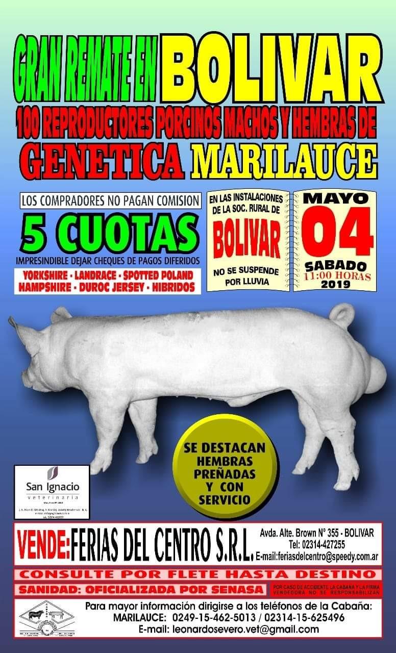 El remate genetica Marilauce llega a Bolivar el sábado 4 de mayo