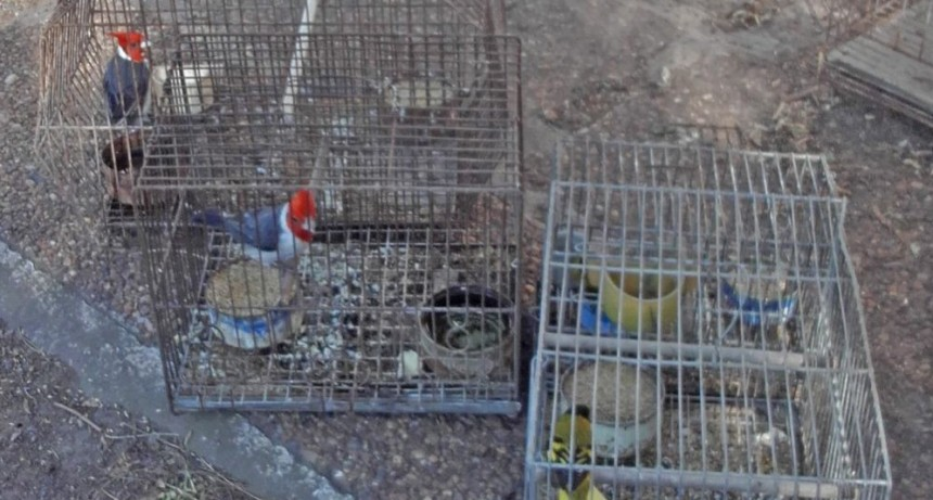 La Máxima: liberación de aves rescatadas de la tenencia ilegal