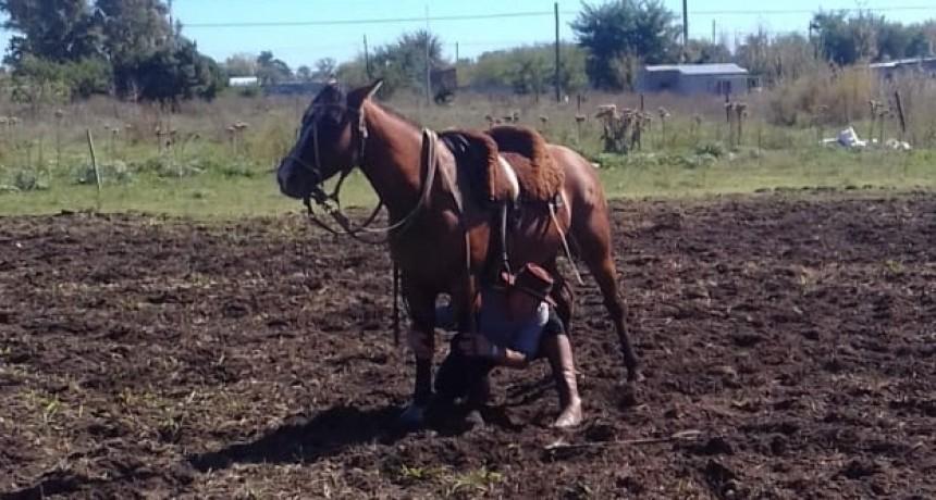 'Es una pasión los caballos criollos y tenemos un gran equipo'