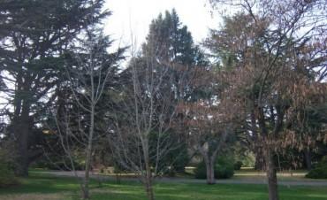 """Poda de árboles:""""Hay que esperar que las hojas se caigan"""""""