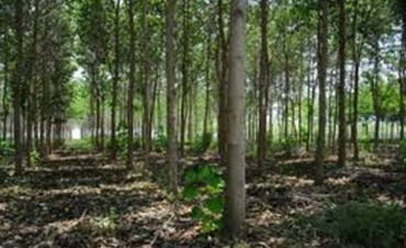 Se plantarán más de 2200 árboles en la ciudad y localidades