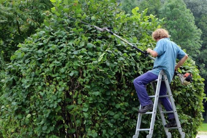 Indican que no hay que podar los árboles y menos hacerlo en otoño o primavera