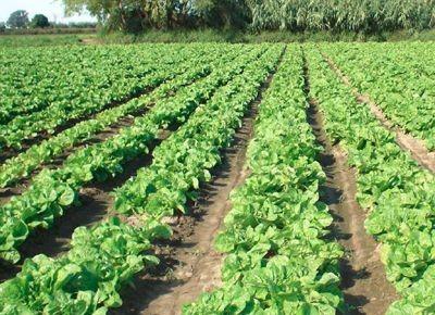 Agroquímicos: a largo plazo, Olavarría realizará controles en las verduras